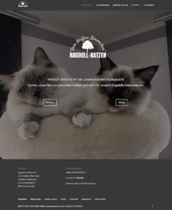 web-screen-ragdollcat-home